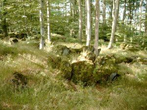 Felswald